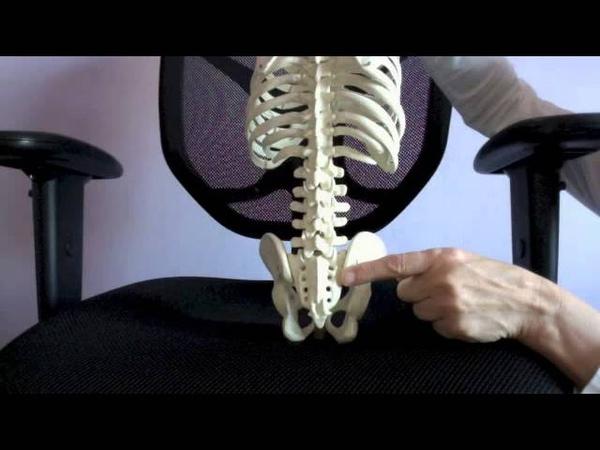 Anatomy of the Sacrum and Sacral Clock Body-Level Meditation