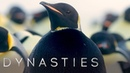 Extremely Rare All Black Penguin Sighting | Dynasties: Behind The Scenes | BBC Earth