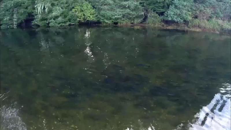 Kanada - In den Wäldern der Westküste