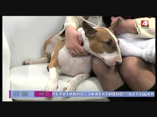 Лучшая собака для ребёнка, бультерьер!  Гости Ранёхонько, дружная семья - Елена, Есения и Злата