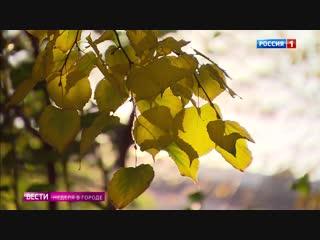 Теплая аномалия: такая осень бывает раз в жизни
