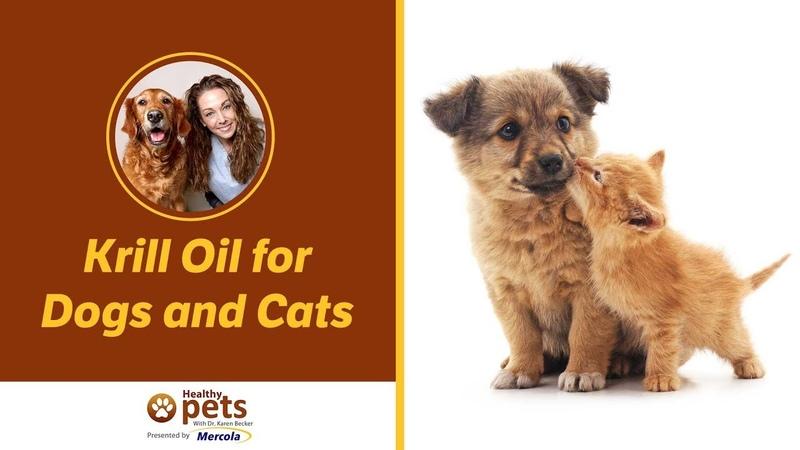 Масло криля для собак и кошек Krill Oil for Dogs and Cats