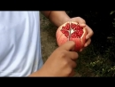 How to open a pomegranate like a boss