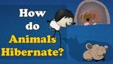 How do Animals Hibernate #aumsum #kids #education #hibernation #hibernate