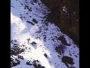 Уникальное видео. Редко кто видел, как охотится снежный барс ирбис.