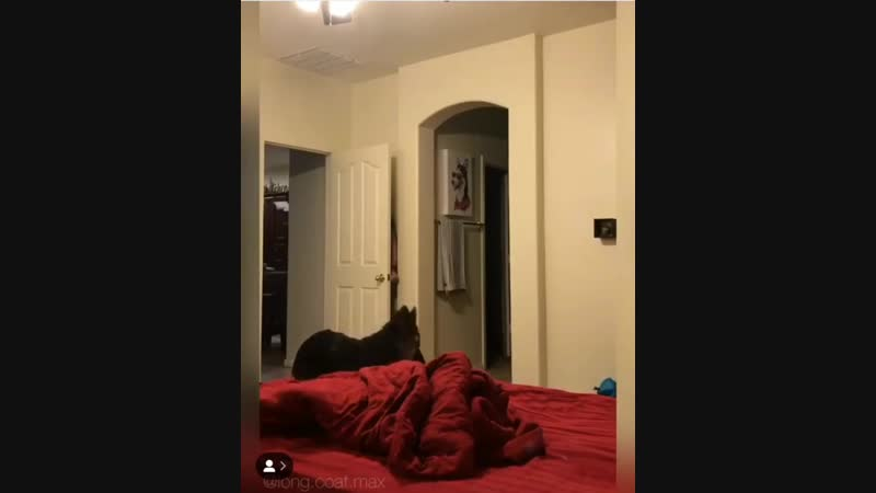 пиздец собакен с деперсонализацией