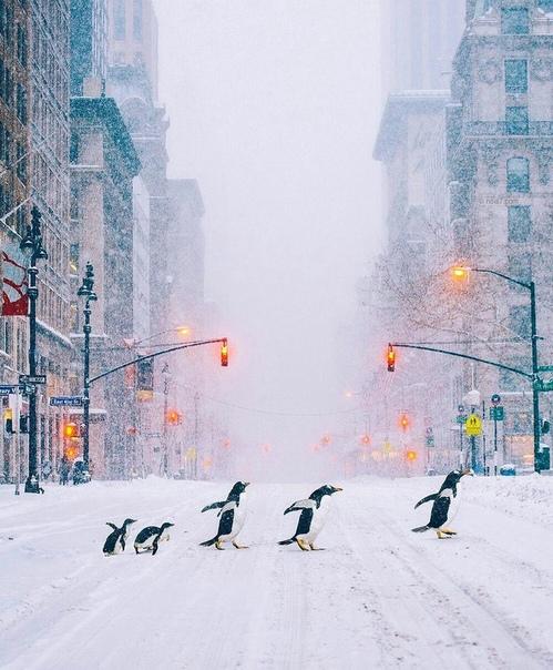Потрясающие фотоманипуляции Роберт Янс гамбургский художник, путешественник и фотограф. Его работы это изображение мира, в котором намного больше фантазии, чем реальности. Каждое изображение