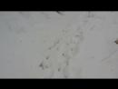 ОХОТА ПЕТЛЯМИ Проверка петель на зайца день второй Установка петель на фазана не стандартный вариант