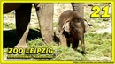 🔴 Bền Lòng Tante Don Chung Rani Zoo Leipzig Animals Travel слоновый