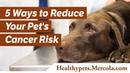 5 способов уменьшить риск заболевания домашнего животного раком / 5 Ways to Reduce Your Pet's Cancer Risk
