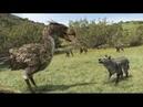 Документальный фильм Вымершие животные кайнозойской эры подробное представление о том, как