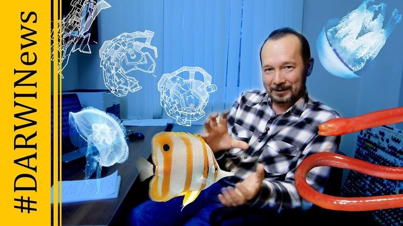 Сухопутная рыба, исследования сумеречной зоны, робот-оригами, самая редкая награда DARWINews