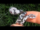 EXOTIC 3.74 Carat Black White Diamond Snake Ring Solid 14K Gold - Estate Auction