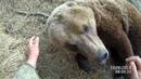 Медведь играет и улыбается