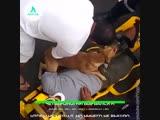 Верный пёс | АКУЛА