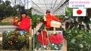 FRUIT PICKER IN JAPAN/ FARMER/ BUHAY OFW