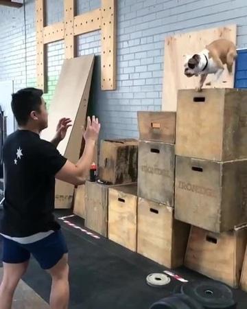 Good boy makes a leap of faith