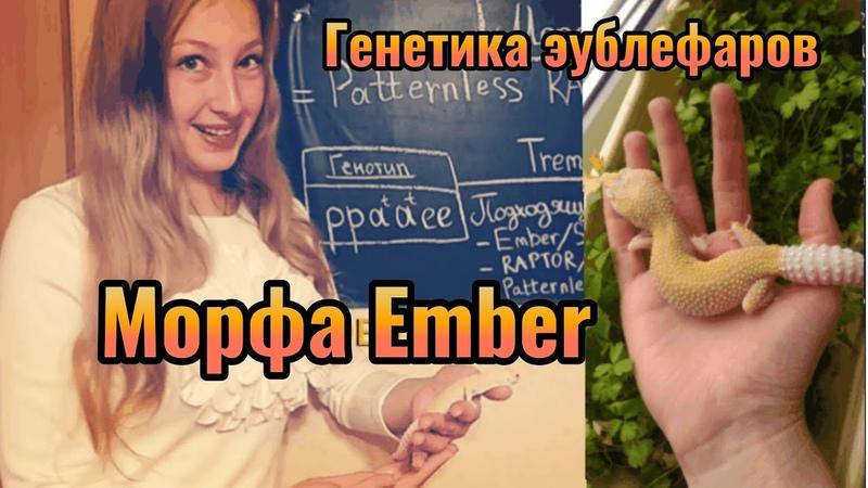 Морфа Ember. Генетика эублефаров