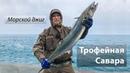 Рыбалка в ЗАПРЕТНОМ месте. Трофейная мелкопятнистая макрель. Морской джиг. 2019/01