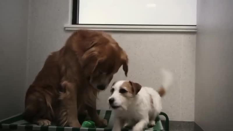 Короткометражный фильм Luscious International's для Sydney Dogs Cats Home