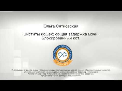 Ольга Сятковская - Циститы кошек общая задержка мочи. Блокированный кот.