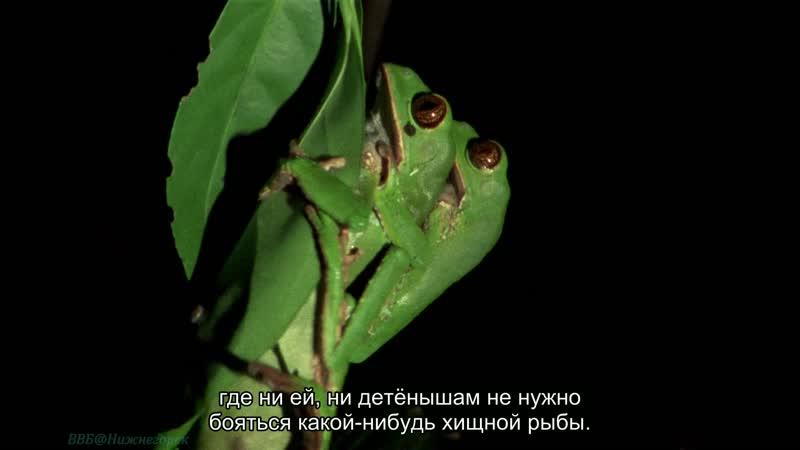 BBC Уроки выживания 01 Появление на свет Познавательный природа животные 1990