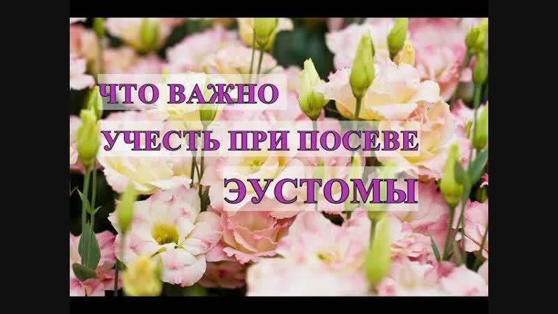 Во саду ли в огороде • Что Важно Учесть При Посеве Эустомы, Чтобы Не Потерять Семена.