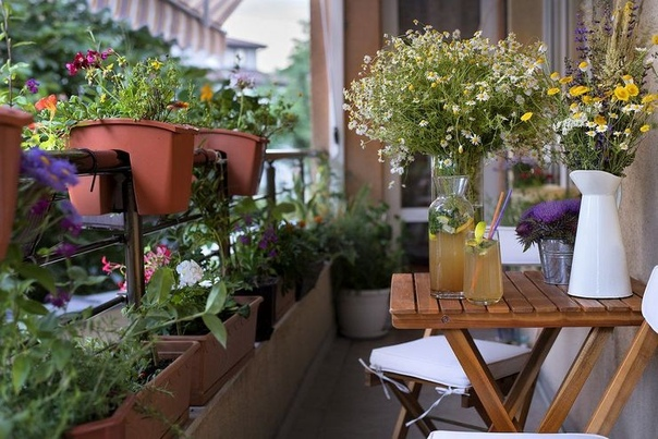 Вьющиеся растения для балкона Чтобы создать уютную и гармоничную атмосферу, а также украсить балкон или лоджию, не обойтись без цветов. Цветы и другие декоративные растения защищают внутреннее