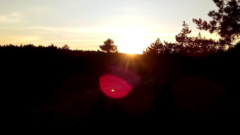 Захід Сонця в Шишацькому лісі
