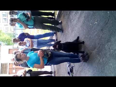 Собаки-проводники