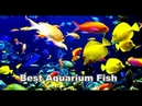Best fish for aquarium Freshwater aquarium fish Betta fish Golden fish