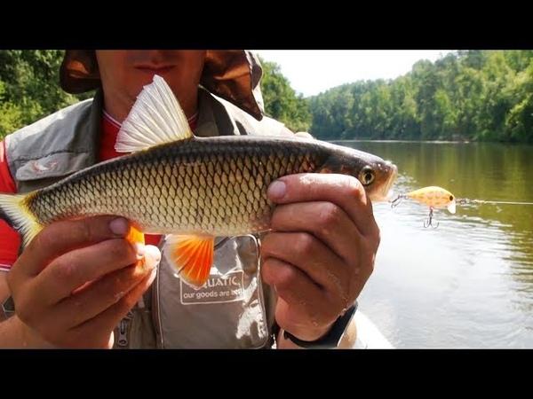 Сплав по реке и ловля голавля на спиннинг воблерами