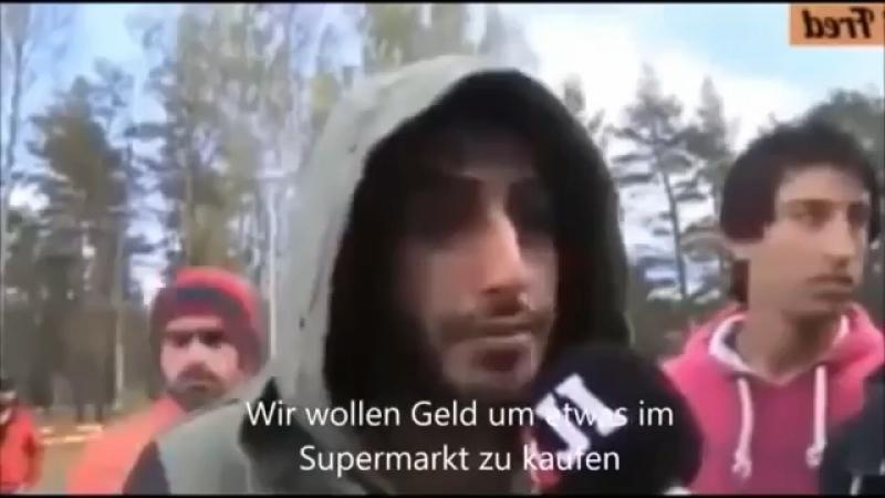 О мигранантсуих выплатах в Германии