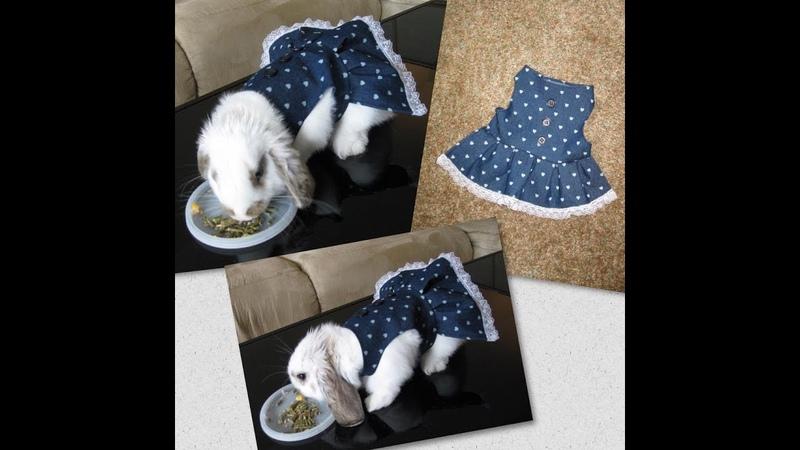 DIY Faça você mesma um vestido para sua cachorrinha, coelha, gata etc. By Customização Cia
