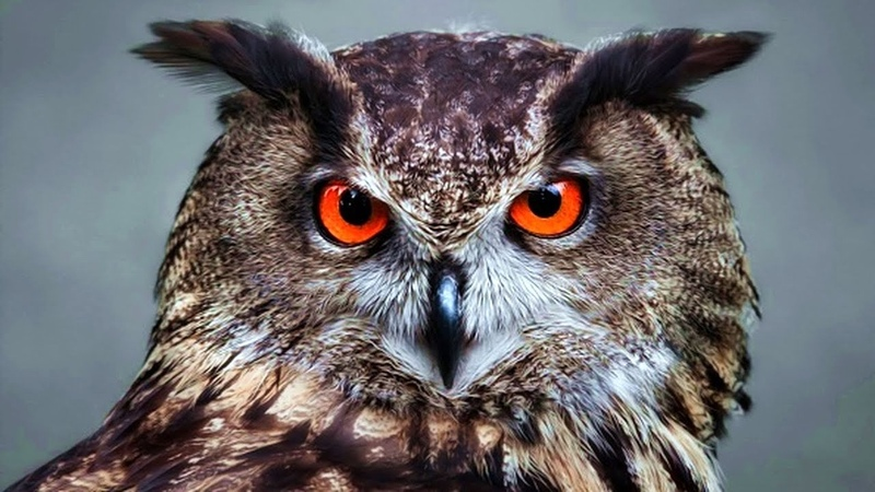 Зрение у животных: мифы и факты (рассказывает Константин Перепечаев)
