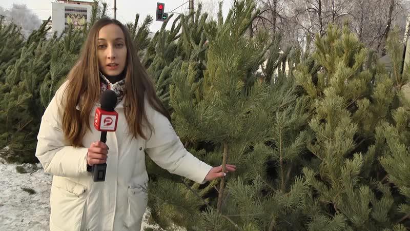 Ёлки, сосны... новогоднее дерево!