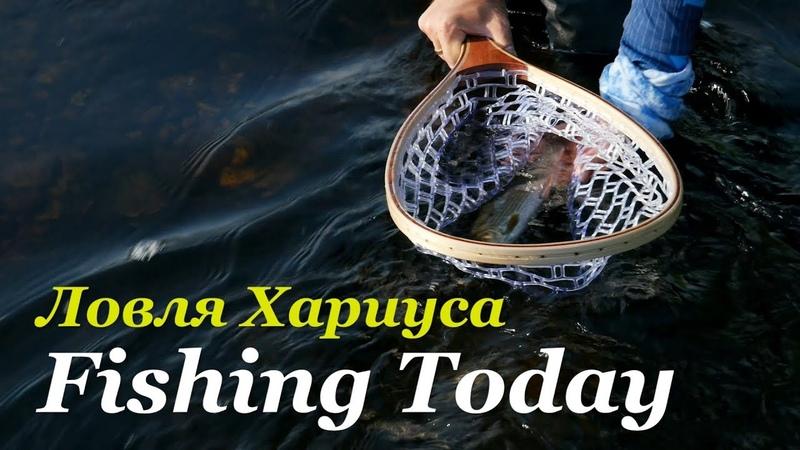 Погнали за хариусом Ультралайт спиннинг Снасти приманки проводки Fishing Today