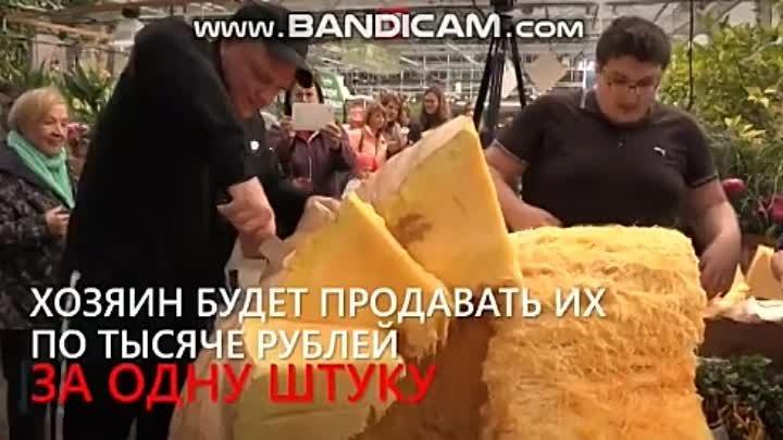 Самая большая ТЫКВА в России! Она весит полтонны. Хозяин назвал её Дусей. Овощ разрезал и раздал москвичам. А семена уйдут на продажу..