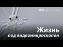 Рыба, мыло, червяк и блоха под видеомикроскопом