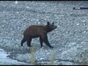 В Ермаковском прошел митинг с требованием не отстреливать медведей