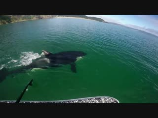 GoPro Awards_ Orca vs. Paddle Board