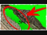 Quantum Games ПОХОЖЕ ЕЙ ПРИШЕЛ КОНЕЦ... ГОНКИ НА ВЫЖИВАНИЕ В GTA ONLINE!!!