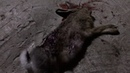 ОХОТА на зайца с TG2! Два подстреленных зайца, пуля СП13 и FMJ