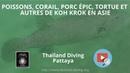 Poissons, corail, porc épic, tortue et autres de koh krok en asie avec Thailand Diving Pattaya Club