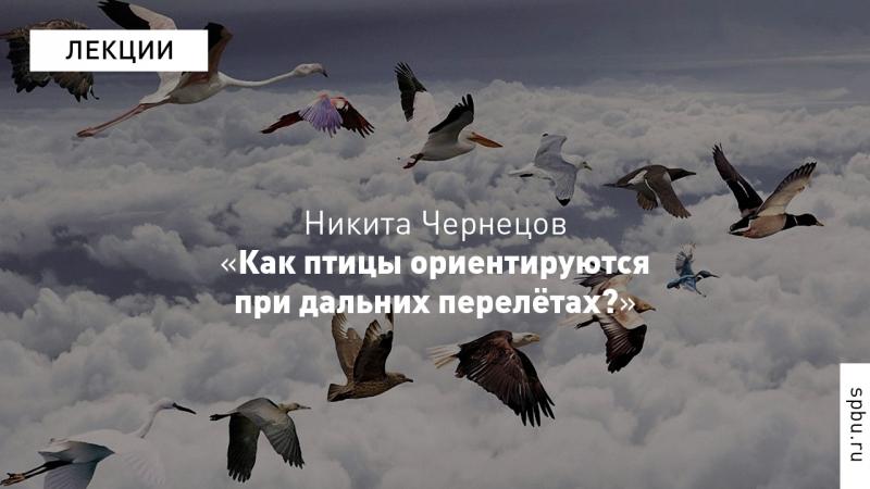 Никита Чернецов «Как птицы ориентируются при дальних перелётах»