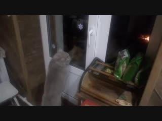 Смеялись всей семьей!)) Открой мне, говорящий кот)