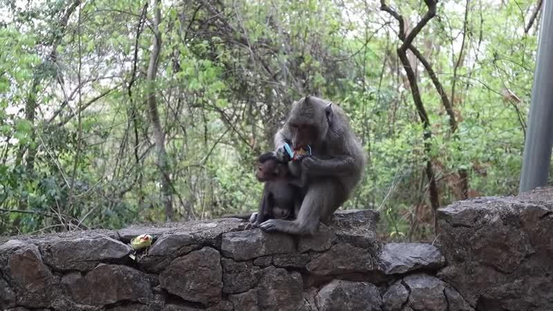 3 Камбоджа. Бешеная тачанка. Культурные обезьяны и миллиард летучих мышей