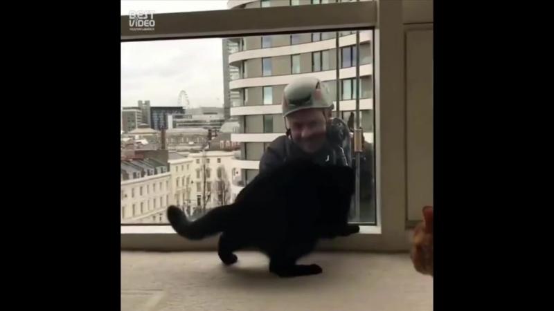Кот - помощник