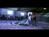 Hempfling - HORSE BE SAFE - Art of Leading - Some moments from the Compact Schooling 2010