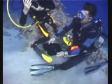 Куба. 2006 год. (scuba diving underwater dive дайвинг shark travel trip lifestyle)